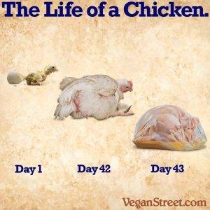 Jak budować siłę i masę mięśniową na diecie roślinnej. Weganizm: dla zwierząt, na zdrowie, dla środowiska.